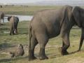 Vicinissimo agli elefanti. Animali meravigliosi!