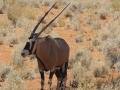 GLI ANIMALI DELLA NAMIBIA